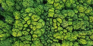 Aerial viev green forest on a spring day, natural background. Photo from the drone. Source: shutterstock.com