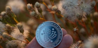 Iota cryptocurrency physical coin held in the hand next to autumn branches.