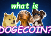 What is Dogecoin - The Ultimate Guide